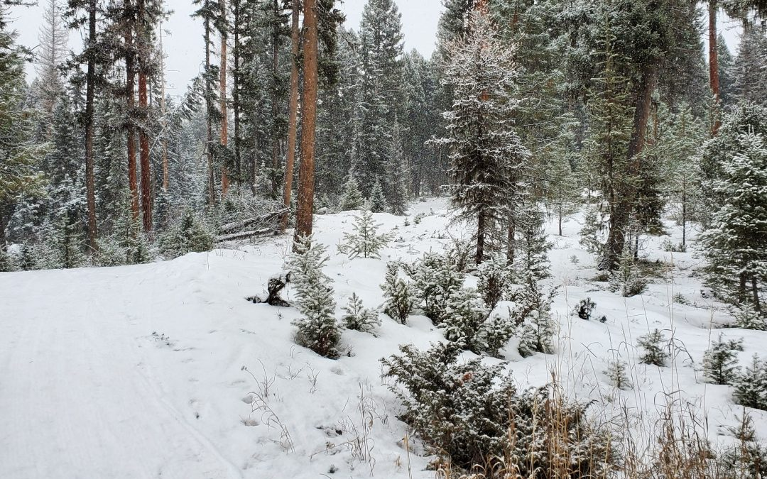 Seeley Lake is Skiing Great – Badwax Update